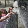 Lust auf einen tierischen Geburtstag?